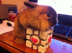 Companion bunny <3