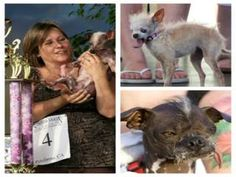 World's Ugliest Dog contest celebrates 25th year with 'Dog Days of Summer'