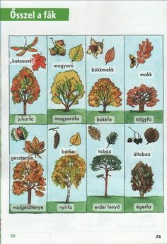 Kis tudósok szókincstára - Évszakok - Kiss Virág - Picasa Webalbumok Environmental Studies, Nature Study, Autumn Activities, Worksheets For Kids, Science And Nature, Special Education, Fall Halloween, Homeschool, Teaching