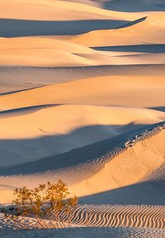 Deserts Meet The Rain by Valerie Millett on 500px; Death Valley National Park