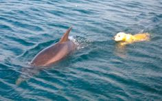 Every day, a Dolphin Comes to the Shore in the Little Irish Town to Take his BFF (a dog) for a Swim.