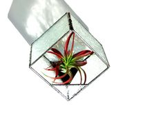 Glass terrarium, stained glass terrarium, box terrarium, table planter, indoor garden, clear textured glass plant holder, airplant holder - pinned by pin4etsy.com