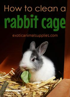 How to keep your bunny's cage clean and healthy. Easy step by step routine for daily cleaning and a weekly deep clean. supplies How to clean a rabbit cage Diy Bunny Cage, Bunny Cages, Rabbit Cages, Rabbit Toys, Pet Rabbit, House Rabbit, Mini Lop Bunnies, Pet Bunny Rabbits, Dwarf Bunnies
