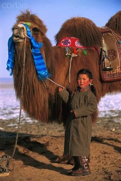 Bactrian Camel (Camelus bactrianus) and young girl, Gobi Desert, Mongolia