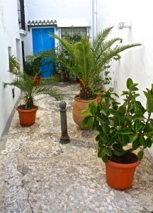 Plants, white washed walls, cobbled streets of Frigiliana