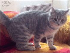 C'est la Journée Internationale du Chat ! Joie, boules de poils et herbe à chat en ce mirifique 8 août, que nous célébrons avec une belle fournée de gifs félins !