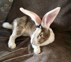 Zeno Cutest Bunnies, Cute Bunny, Draw Animals, Cute Animals, Bunny Care, Jack Rabbit, Bunny Rabbits, Hare, Animal Drawings
