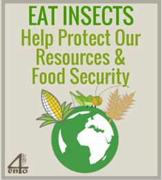 Insects can play a huge role in reducing resource use and waste in our current food production. Find out what this is so important to the future of planet. Bug Food, Global Food Security, Farming, Cricket, Bugs, Buffet, Insects, Play, Future