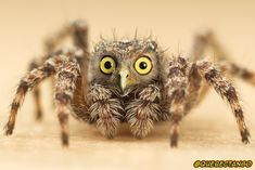 Spowl. | 28 Unsettling Animal Mashups That Should Probably Never Have Happened