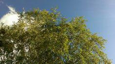 Blauwe luchten, een 9 voor mijn eindopdracht... mijn dag kan niet meer stuk #groen