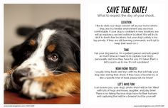 Information Guide | Austin, Texas and Harker Heights, Texas Pet and Dog Photography
