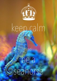 keep calm and be a seahorse / created with Keep Calm and Carry On for iOS #keepcalm #seahorse