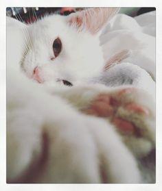 Kitten cuddles with George!