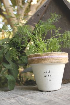 6 Dill with It. Dill Herb Indoor and Outdoor Pot or