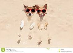 Image result for dogs with sunglasses images