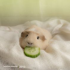 I don't share my cucumber with you