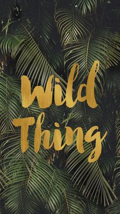 Wild Thing | Palms iPhone Wallpaper