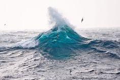 How Climate Change is Sinking Seabirds   Audubon