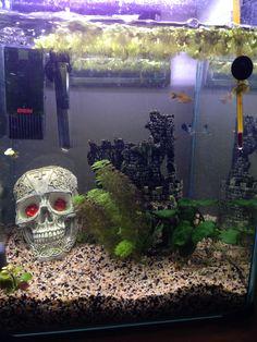 Fena pa akvarium