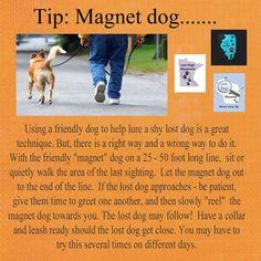 Magnet Dog http://www.lostdogsofwisconsin.org