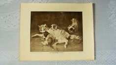 "Here is a reprint of Julius Adam's Cat and Kittens at Play.  It was printed for the School Century German Art Series.  It is a black and white print.  The outside measurements of the print is approx. 14"" x 11 1/8"".  The picture itself is approx. 9 7/8"" x 7 3/4"".  It is in good vintage condition.  There is some wear, aging and discoloration to the print.  There is also some tearing to the edges."