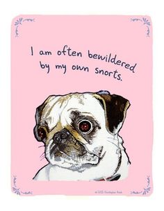 Pugs... they have the same bewilderment with gas problems.  LOL