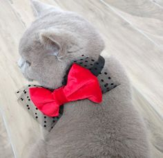 Cat Bow Tie Collar Velvet and Tulle, Dog Bow tie, Pet Bow tie Collar Red and Black ideal for special occasions