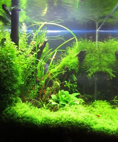 54 best Freshwater Aquarium Ideas images on Pinterest | Planted ...