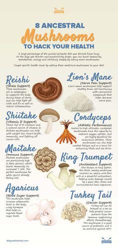 12 Incredible Health Benefits Of Basil - Resouri Basil Health Benefits, Ginger Benefits, Fungi, Home Remedies, Natural Remedies, Holistic Remedies, Herbal Remedies, Natural Antibiotics, Hormonal Acne