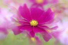 Floral Ballet - null