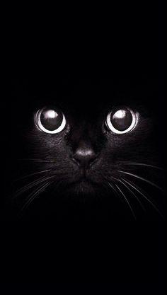 Black cat dibujo y pintura cat wallpaper, cat photography y cats. Tier Wallpaper, Cat Wallpaper, Animal Wallpaper, Tumblr Wallpaper, Wallpapers Tumblr, Mobile Wallpaper, Screen Wallpaper, Handy Wallpaper, Best Wallpaper For Android