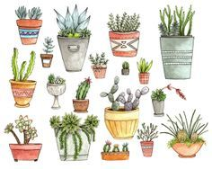 Illustration succulent plant