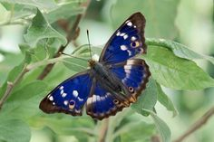 most beautiful blue butterflies