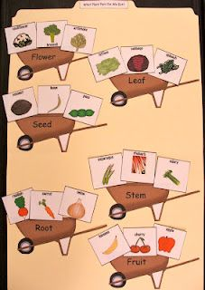 food from plant parts file folder game- Happy Literacy! blog