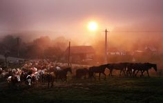 Morning in Chirpar, jud. Sibiu - Photo by Sorin Onisor Hungary, Romania, Horses, Concert, Animals, Animales, Animaux, Concerts, Animal