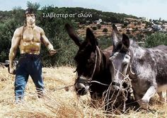 30 αστείες φωτογραφίες που θα σας κάνουν να κολλήσετε. - Εικόνα9 Funny Shit, Funny Stuff, Horses, Memes, Quotes, Animals, Humor, Funny Things, Funny Things