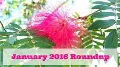 Smores & Sundresses ~ January 2016 Roundup
