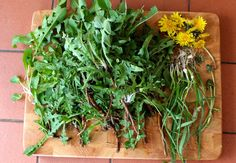 Rethinking Weeds: Becoming Plant Literate   And Here We Are