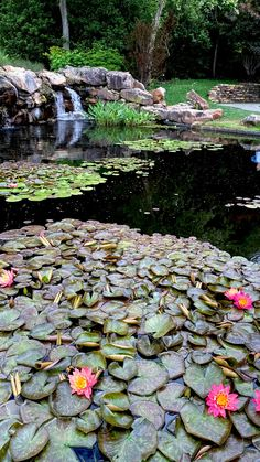 Beautiful Photos Of Nature, Beautiful Places In The World, Nature Pictures, Beautiful Landscapes, Beautiful Flowers Garden, Beautiful Roses, Ponds Backyard, Backyard Landscaping, Small Garden Waterfalls