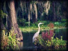 Okeefenokee Swamp