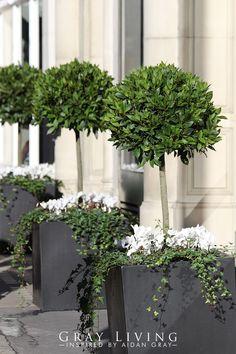 Bay Tree Front Door, House Front Porch, Outdoor Planters, Garden Planters, Outdoor Gardens, Front Garden Entrance, Front Porch Flowers, Front Door Planters, Garden Furniture