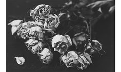 Roses in black and white. by LostInTheValleyPhoto