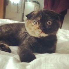 This Cat's Offended Face Is Perfect. The perma-stare of feline disbelief is judging you.