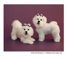 Dollhouse Miniature Maltese Dogs (with puppy clip) - Kerri Pajutee - 3124726