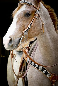 ^Strawberry Roan all dressed up, beautiful breast callor and headstall.