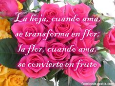 poemas de amor con flores | Imagenes de Amor para Facebook: Imágenes bonitas de flores con frases ...