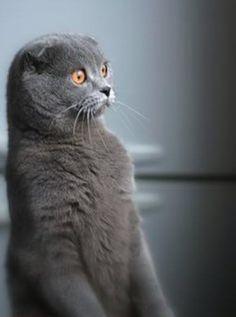 """It's the """"I don't believe it!"""" cat……."""