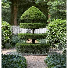 ~ just sayin topiary love ~ Pinterest #topiary