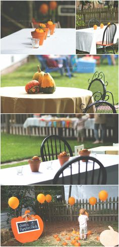 Behind the Camera and Dreaming: First Birthday: Jonah's Pumpkin Patch (decor) I like the pumpkins in the terracotta pots.