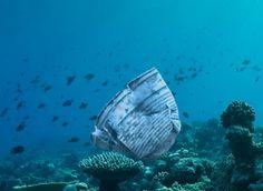 El latido del coral   Conciencia Ecológica COGE3busca involucrar a las personas a que recojan 3 restos plásticos de playas/bosques y los depositen en el contenedor de reciclaje.
